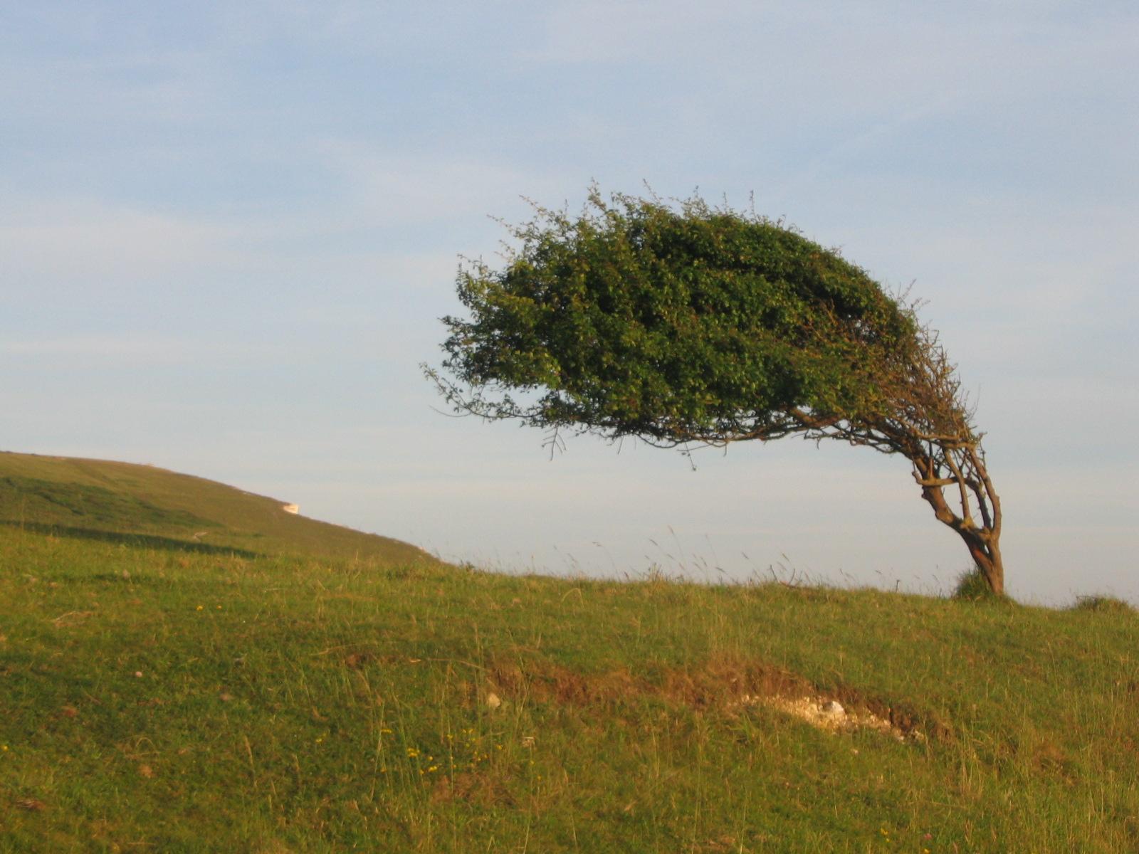 межкомнатные картинки как деревья гнет ветер день
