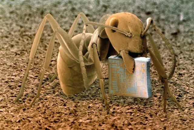 Kumpulan foto luar biasa hasil mikroskop elektron yokotrix