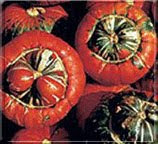 Чалмовидные тыквы