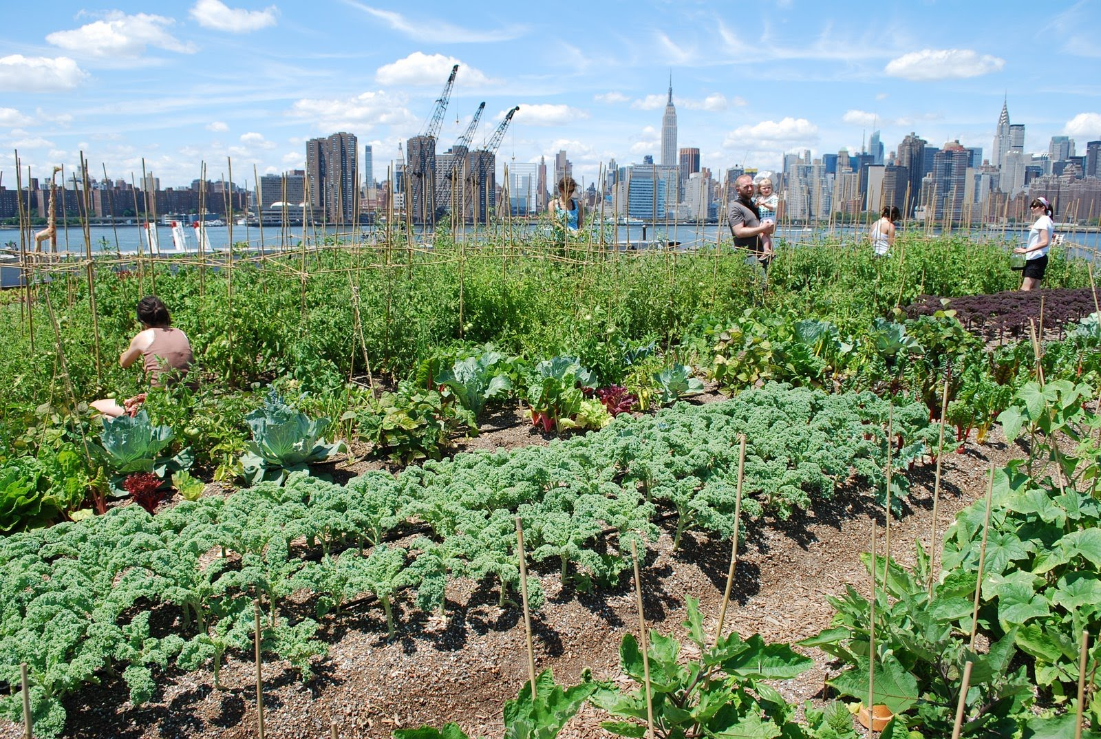 The importance of the practice of urban farming in todays world