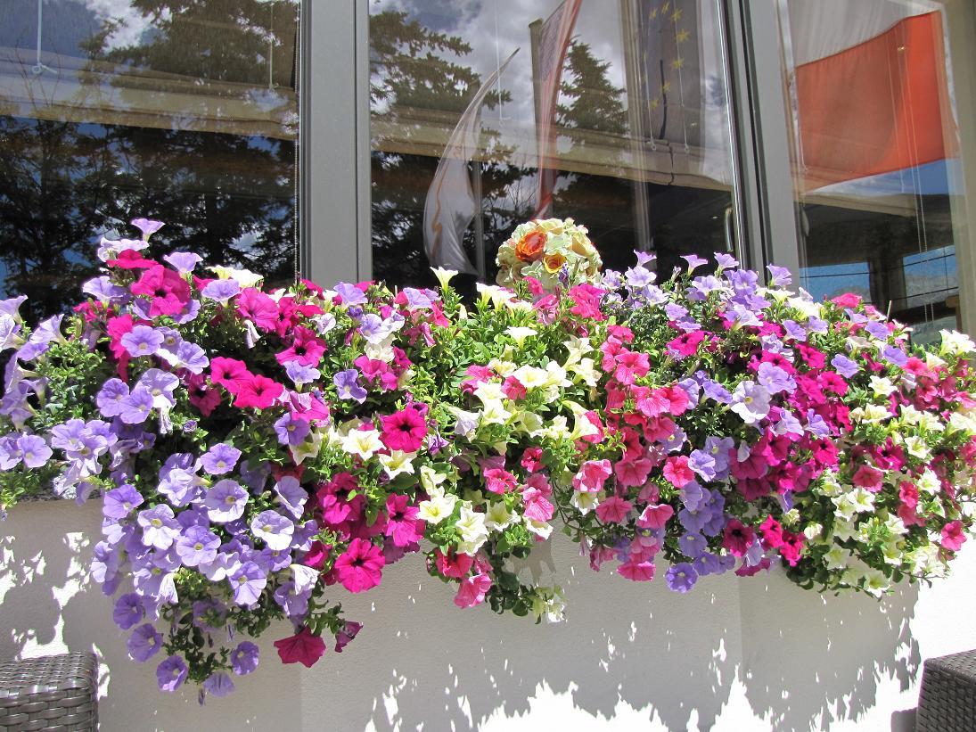Fiori Campanelle Da Balcone da livigno, con furore, vi mostro balconi di ogni colore