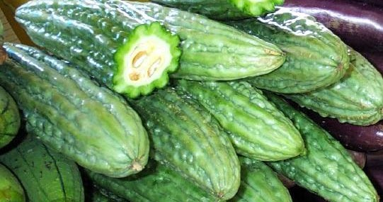 ampalaya momordica charantia linn pastillas Ampalaya, amargoso or bitter gourd (momordica charantia linn) is one of the  most important commercial and backyard fruit vegetables in the country today.