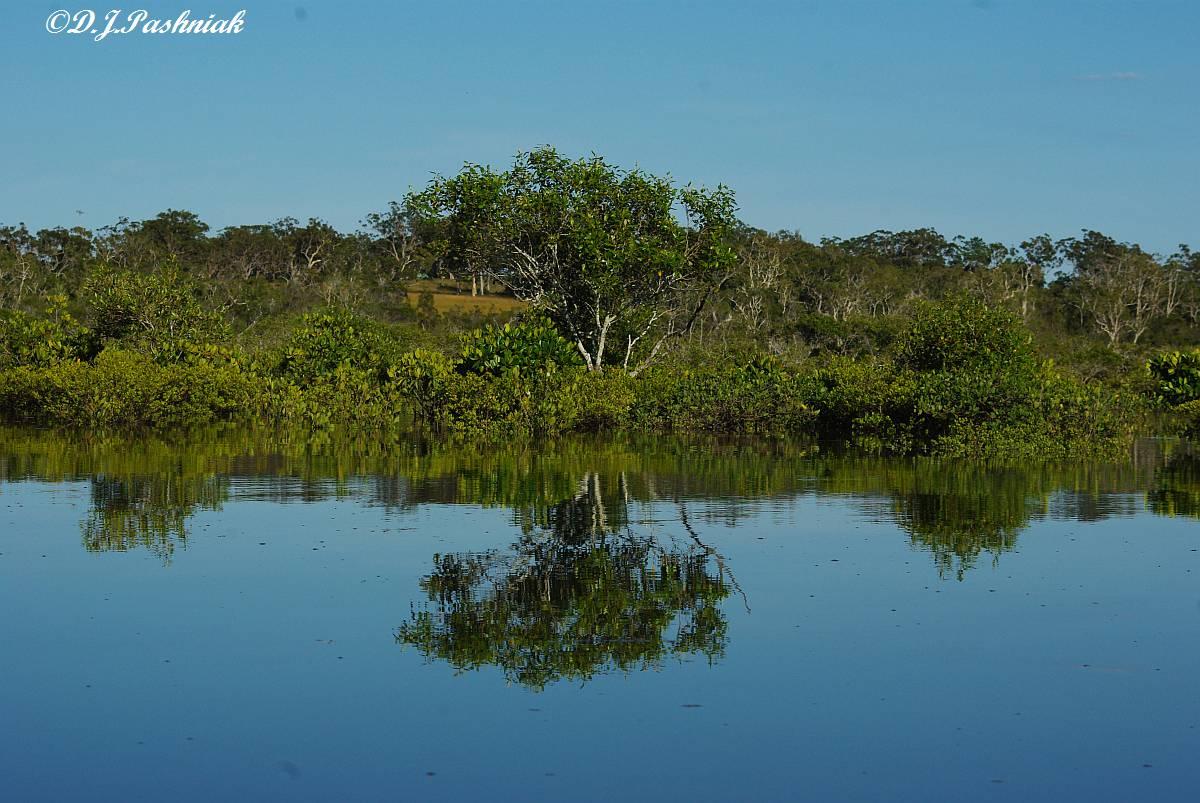 Abbotts Creek Alligator