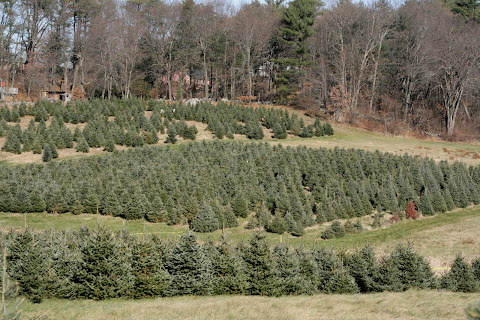 Cut Your Own Christmas Tree Massachusetts