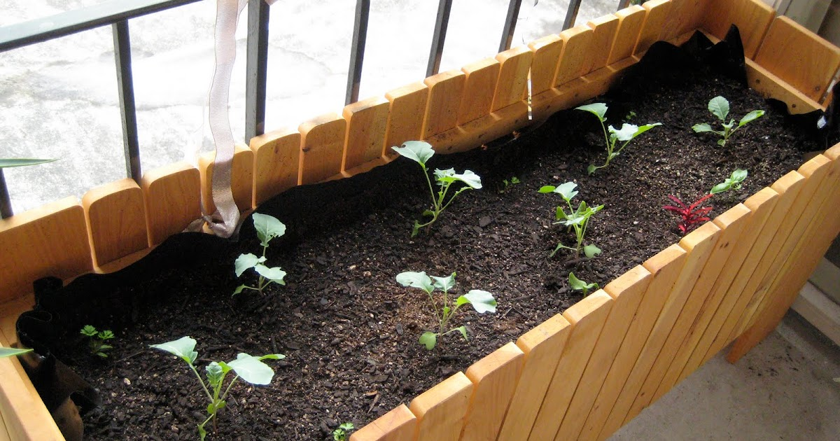 Sustainability and the City: Setting up a Balcony Garden