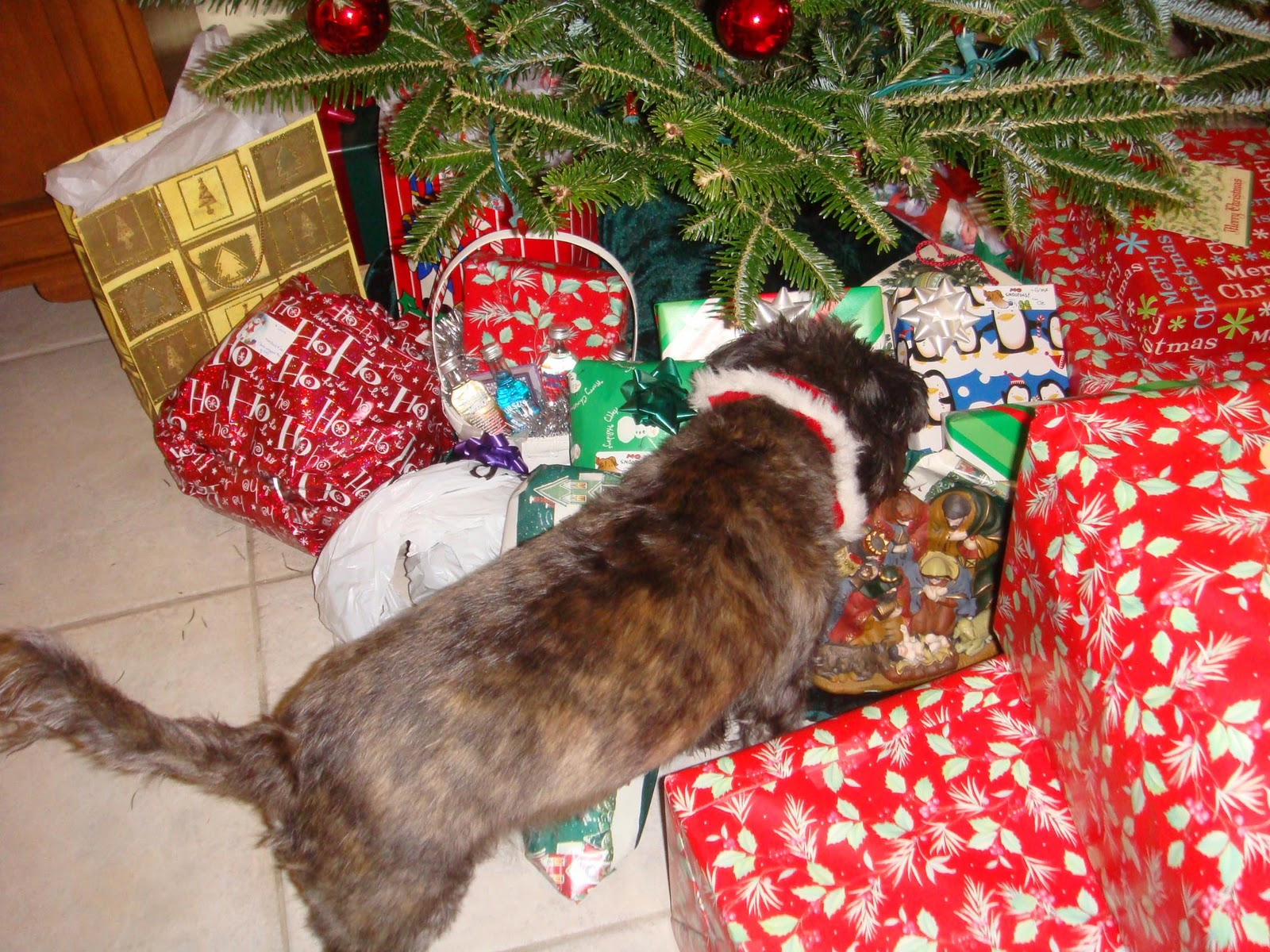 My Terrier Ific Christmas Oz The Terrier Lifestyle Dog Blog
