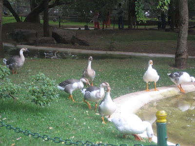 Ducks, Mysore Zoo