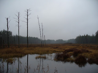 foto: Polesia bogs