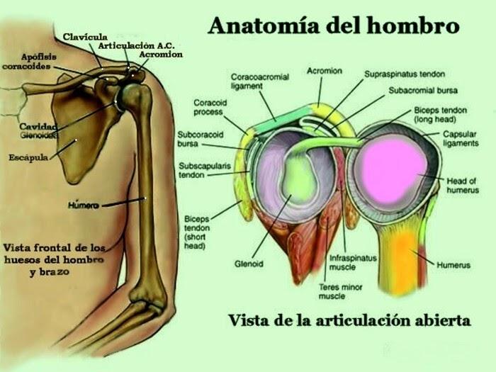 El blog de Francisco Gilo: Hombro doloroso