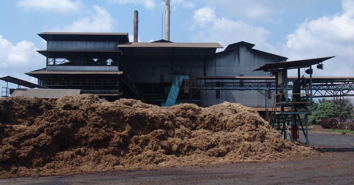Oil palm companies should build biomass power plants | MY