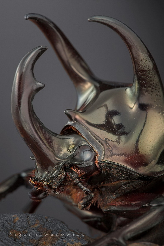 Cool Pictures of Alien Insects - Insect Macro Photography