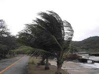 Palm Trees in the Wind in Hurricaine on Corregidor