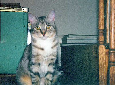 FloJo the late and great cat - my inspiration, my grief