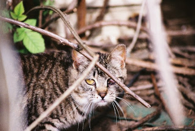 secret cat, feral cat of the day photo