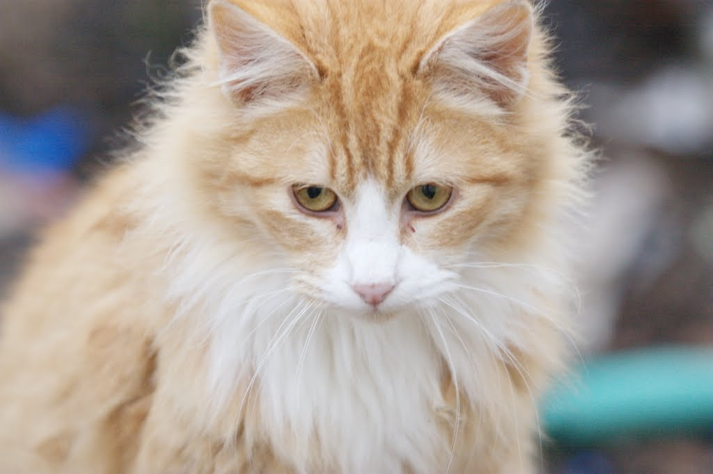 Grass is always greener on the other side | Orange kittens ...  |Fluffy Orange Kittens