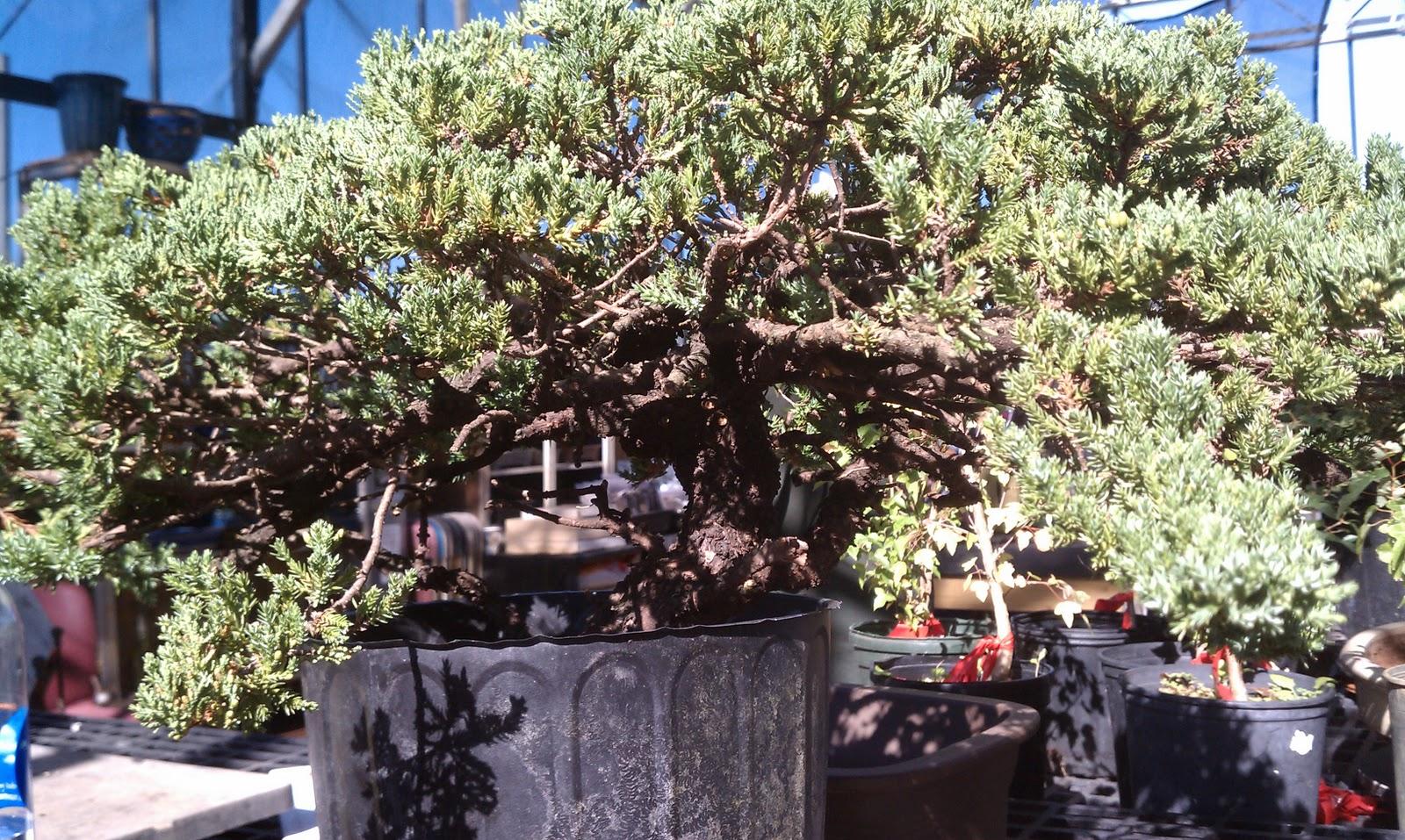 Bonsai Tree 30 Amazing Plant City Bonsai Inspirations