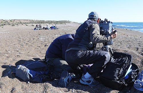 El canal de Ataque de Punta Norte - La meca para los fotógrafos de  vida salvaje