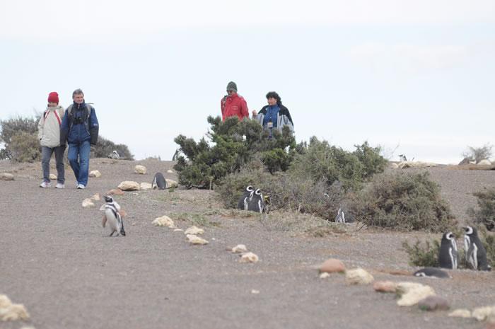 Punta Tombo - Un logro de la conservación de la Mano de una familia de Pioneros