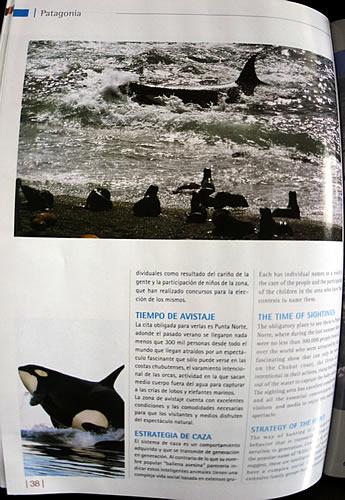 Punta Norte - Temporada de Orcas - Difusión en Andes Lineas Aereas