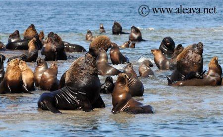 Punta Pirámides  tierra de lobos marinos