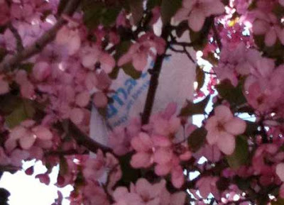 White Walmart bag with tagline visible among the flowers