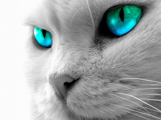Cat with Green and Blue Eyes