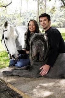 Hercules picture, Hercules photo, Hercules images, biggest dog picture, biggest dog photo, biggest dog images