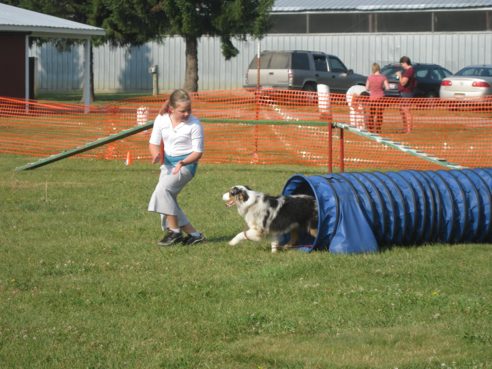 4h Clover Country 4 H Dog Show