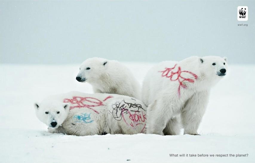 urso polar, animal, wwf, grafitti, respeito pelo planeta