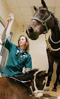 Oh, Hi Vet School: Where to Find Veterinary Experience?