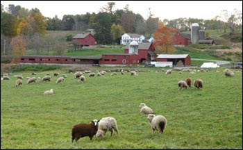 WS sheep farm