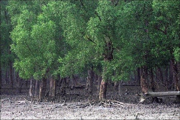 irfan alwi: fungsi hutan mangrove