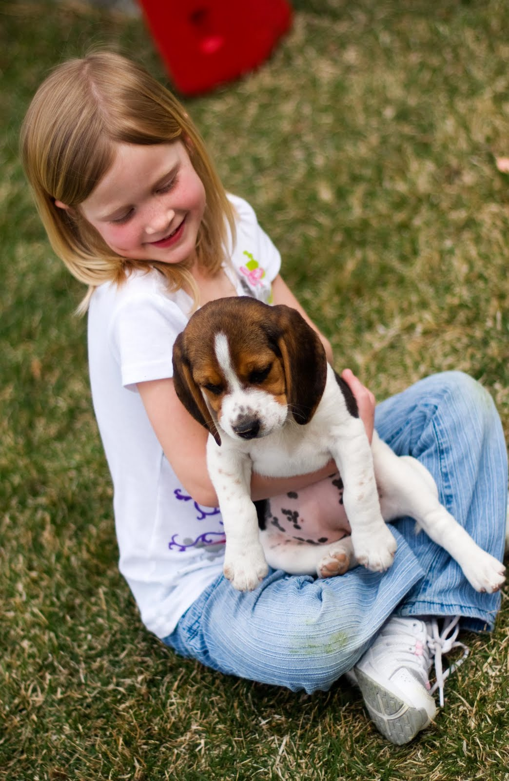 A Utah Mom S Life In New Hampshire Puppy Love Our Own Beagle