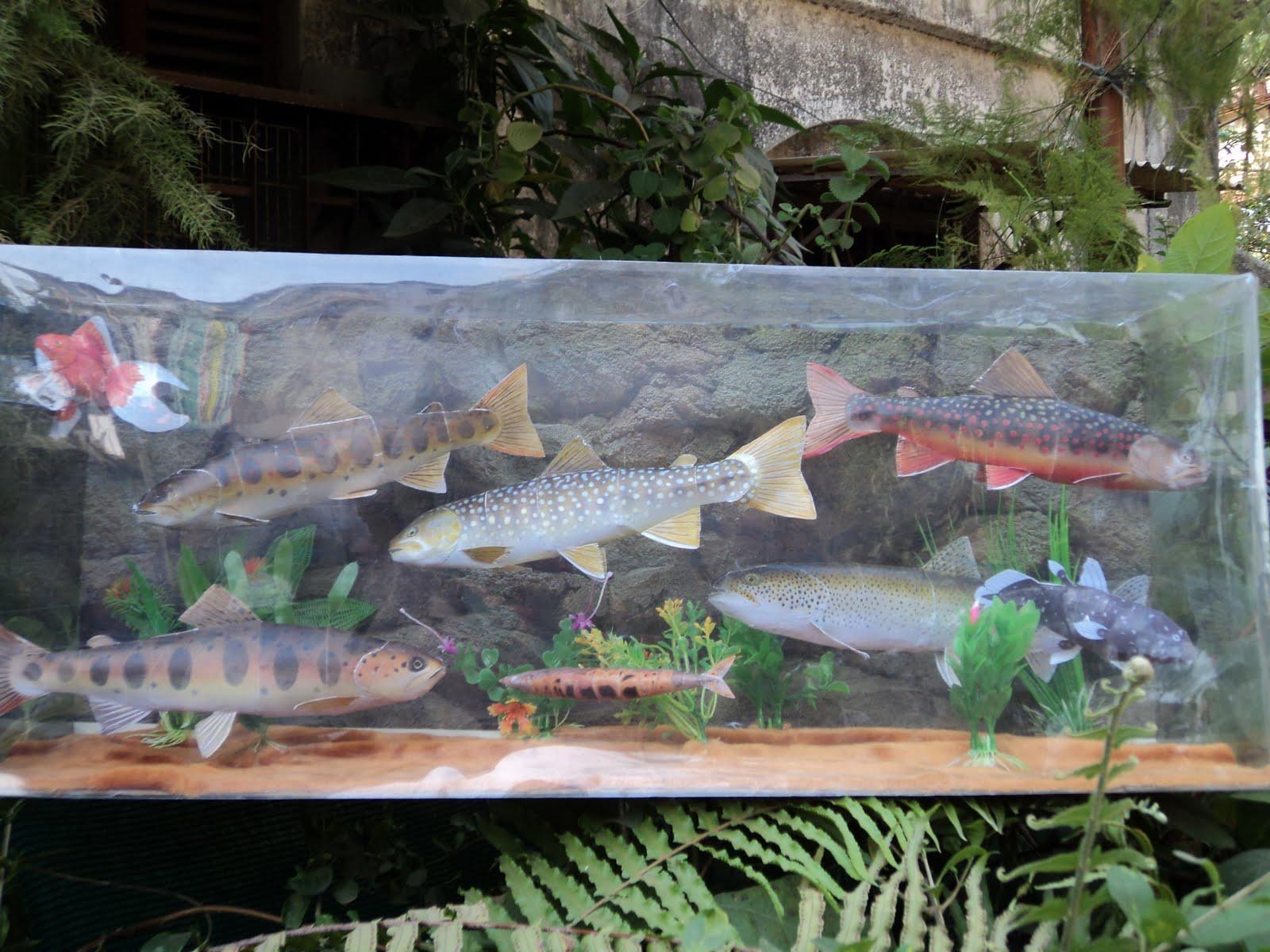 Fish tank dating