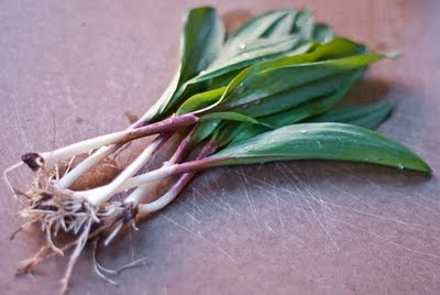 Ramps (USA, West Virginia)