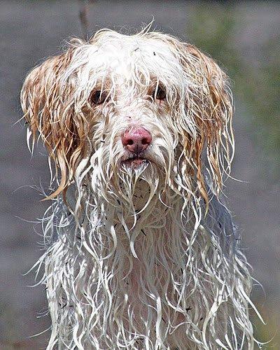 Makin U Happy wet animals soz 4 the wet animal protesters