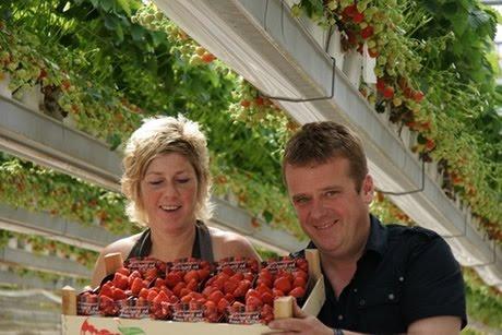 hoe bewaar ik aardbeien