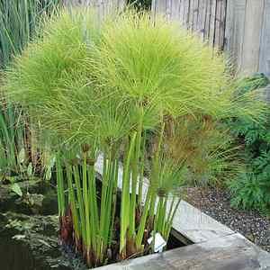 Giardinaggio e fiori il papiro for Giardinaggio e fiori