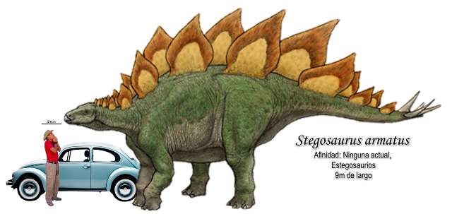 Stegosaurus armatus a escala.