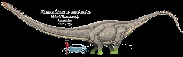 Mamenchisaurus constructus a escala