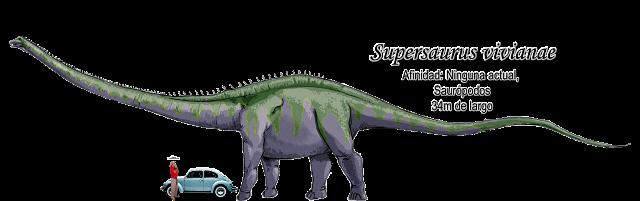 Supersaurus vivianaea escala