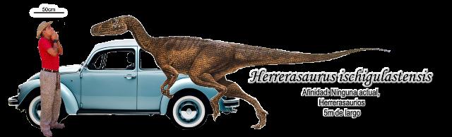 Herrerasaurus ischigulastensis a escala.