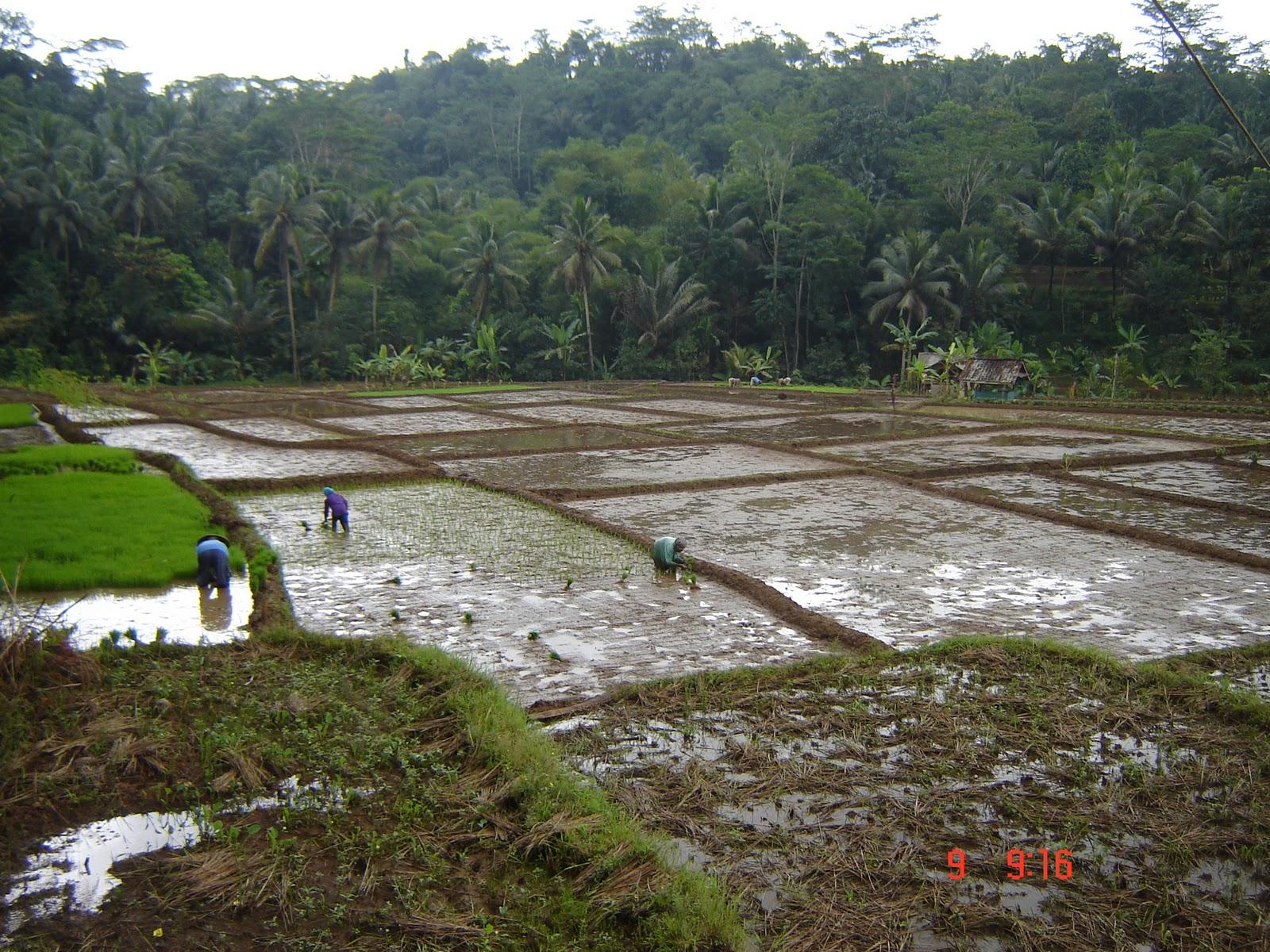 Wisata Desa Jelat Wisata Desa Jelat Ciamis Jawa Barat