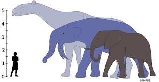 Resultado de imagen de diversificacion mamiferos