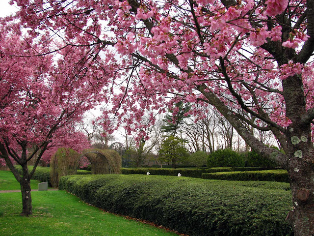 Cherry-Blossom-Sky-at-Nassau-County-Museum-of-Art