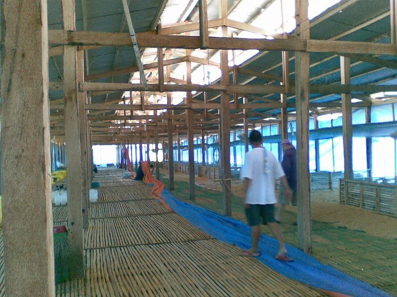 Jungle Jil Chicken Farming In The Philippines A Good Idea