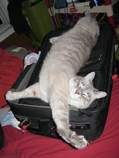 Photo of a cat stretched-out on a suitcase