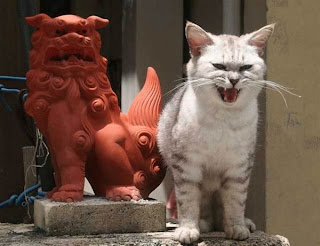 photo of a mad cat next to a statue