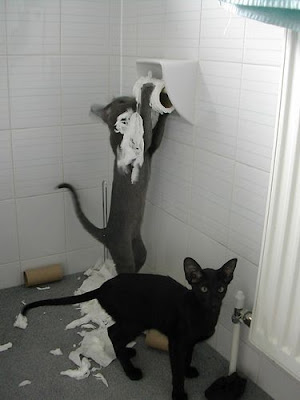 photo of two cats on one has torn-up a roll of toilet paper