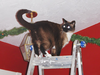 picture of Koko on top of a ladder